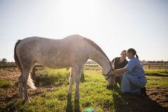 Woman and vet tending to horse. In field on sunny day royalty free stock image