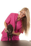 Woman veterinarian stethoscope and pig Royalty Free Stock Photo