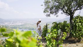 Woman between vine plants on hill with view on river. Back view of lady walking between raws of vine plants with view on valley of Douro river in winemaking stock video footage