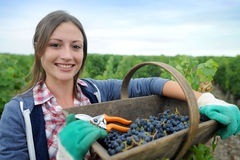 Woman in vineyard Stock Photos