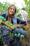 Woman in vineyard Royalty Free Stock Image