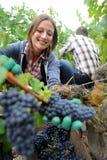Woman in vineyard Royalty Free Stock Image