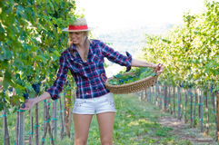 Woman in the vineyard Royalty Free Stock Photos