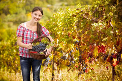 Woman in vineyard Royalty Free Stock Images