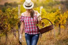 Woman  in vineyard Stock Image