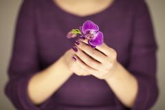 Woman in violett 50`s dress hands holding some orchid flowers. Sensual studio shot can be used as background Royalty Free Stock Photography