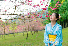 Woman visiting blooming cherry flower trees park Royalty Free Stock Images