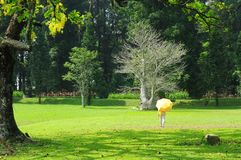 A woman walk with yellow umbrella at bogor botanical garden stock photos