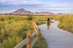 A woman walkimg on the trail in Wetlands park Las Vegas. On sunset stock photo