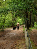 Woman walking. A Woman walking her dog in a forest Stock Photography