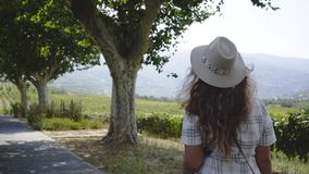Woman walking on alley near vine plants between hills. Back view of young lady going on countryside walkway near vine plants in valley of Douro river between stock footage