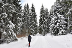 Woman walking alone in winter forest Stock Photos