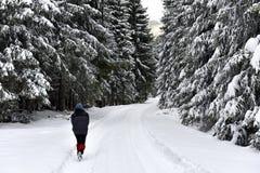 Woman walking alone in winter forest Stock Photo
