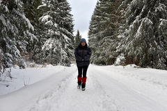 Woman walking alone in winter forest Stock Image