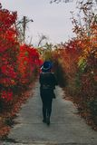 Woman is walking along the red alley in the park royalty free stock image