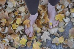 Barefoot woman walking in leaves. Woman walking bare feet in the Autumn leaves that are changing colors feet only Stock Images