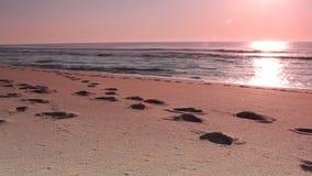Woman walking on beach leaving foot prints stock video footage