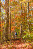 Woman walking into  beautiful autumn forest. Countryside landsca Stock Photography