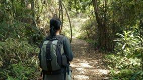 Woman walking through beautiful jungle. Hiking outdoors on nature - pretty woman walking through beautiful jungle. Walking the trek with backpack stock video