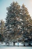 Woman walking in beautiful winter forest Stock Image