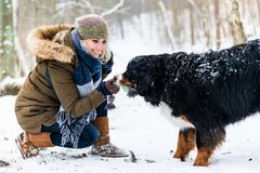 Woman walking Bernese mountain dog on a winter day. In the snow royalty free stock image