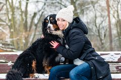 Woman walking Bernese mountain dog on a winter day. In the snow stock image