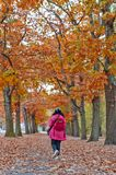 Woman walking among colorful red and yellow foliage trees in garden during autumn at Wilhelm Kulz Park in Leipzig, Germany. Woman walking among colorful red and royalty free stock photography