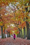 Woman walking among colorful red and yellow foliage trees in garden during autumn at Wilhelm Kulz Park in Leipzig, Germany. Woman walking among colorful red and royalty free stock photo