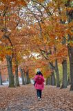 Woman walking among colorful red and yellow foliage trees in garden during autumn at Wilhelm Kulz Park in Leipzig, Germany. Woman walking among colorful red and royalty free stock image