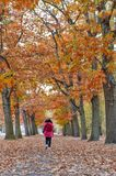 Woman walking among colorful red and yellow foliage trees in garden during autumn at Wilhelm Kulz Park in Leipzig, Germany. Woman walking among colorful red and stock image