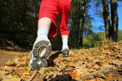 Woman walking cross country trail in autumn forest Stock Image