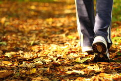 Woman walking cross country trail in autumn forest Royalty Free Stock Photography