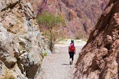 Woman walking desert. Royalty Free Stock Photography