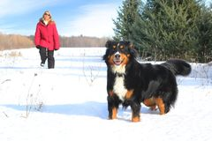 Woman walking with dog. Woman with red jacket walking during winter with her dog Royalty Free Stock Image