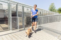 Woman walking a dog in animal shelter. Wanting to adopt the animal royalty free stock images