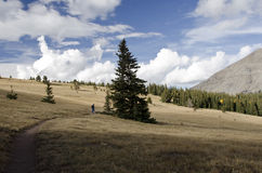 Woman walking dog on mountain path. Distant landscape of woman walking a dog on a mountain path, pausing by a large pine tree. The picture includes sky, clouds Royalty Free Stock Image