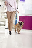 Woman walking with dog in veterinarian's office Stock Images