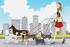 Woman walking dogs. A vector illustration of a beautiful woman walking many dogs in the city Stock Photo