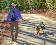Woman Walking Dogs on Leash. A woman hiker with her two dogs getting exercise on a beautiful sunny day royalty free stock photo