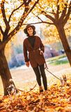 Woman walking with dogs outdoors in autumn Stock Images