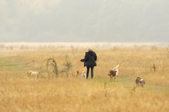 Woman walking dogs in park. Middle aged woman taking dogs for a walk in Hainault Forest country park on a rainy, misty and foggy day in Autumn in England, UK royalty free stock photos