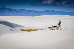 Woman Walking Dogs - White Sands National Monument Royalty Free Stock Photos
