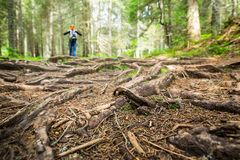 Woman is walking in the forest Royalty Free Stock Photography