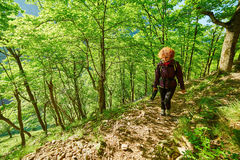 Woman walking in the forest Royalty Free Stock Photos
