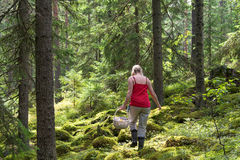 Woman walking in forest and picking mushrooms Stock Photo