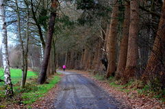 Woman walking in the forest Royalty Free Stock Image