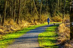 Woman walking her dog in Campbell Valley Regional Park in the Township of Langley. British Columbia, Canada Royalty Free Stock Images