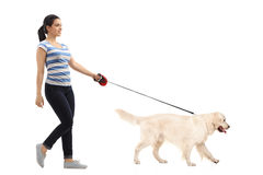 Woman walking her dog. Full length profile shot of woman walking her dog isolated on white background Stock Photos