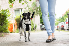 Woman Walking With Her Dog. Young Woman Walking With Her Dog On Street Stock Images