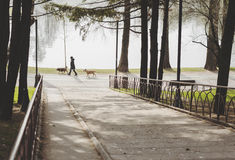 Woman Walking Her Dogs Early In The Morning Royalty Free Stock Image